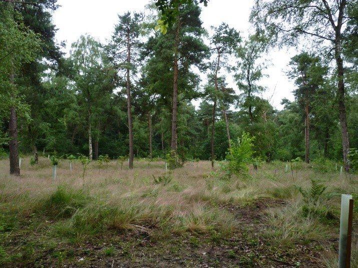 Pilots revitalisering laagproductief bos uitgevoerd in bossen Nunspeet en Venray