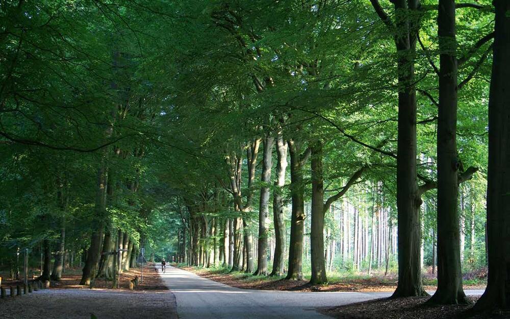 Oproep: Gemeentelijke bos- en natuurterreinen helpen bij maatschappelijke opgaven - wees klimaatslim